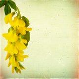 Uitstekende bloemenachtergrond met gele acaciabloemen op een bruin royalty-vrije stock foto