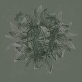 Uitstekende bloemenachtergrond met sneeuwklokjes en libellen, hand-D Stock Foto's