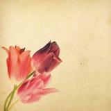 Uitstekende bloemenachtergrond met tulpen op de achtergrond van oud g Stock Fotografie