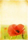 Uitstekende bloemenachtergrond in retro stijl. Kan voor een cale worden gebruikt Stock Afbeelding