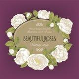 Uitstekende bloemenkaart met een kader van witte rozen op purpere achtergrond Stock Foto