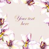Uitstekende bloemenuitnodigingskaart met witte orchideeënbloem Royalty-vrije Stock Afbeeldingen