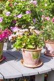 Uitstekende bloempot met bloem Royalty-vrije Stock Foto's