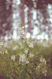 Uitstekende bloemstijl Royalty-vrije Stock Foto's