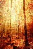 Uitstekende bomen Royalty-vrije Stock Afbeelding