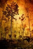 Uitstekende boom Stock Foto's