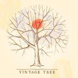 Uitstekende boom Stock Afbeeldingen
