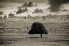 Uitstekende boom Royalty-vrije Stock Afbeeldingen