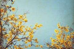 Uitstekende boombloem in de zomer Royalty-vrije Stock Afbeelding