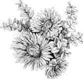 Uitstekende botanische de tuinbloemen van de illustratiebloesem Stock Fotografie