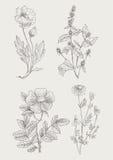 Uitstekende botanische geplaatste illustratiebloemen Stock Afbeeldingen