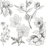 Uitstekende botanische geplaatste illustratiebloemen Stock Foto