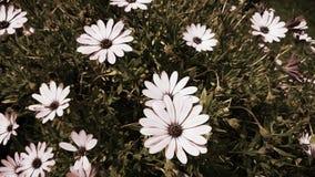 Uitstekende camerabloemen stock foto's