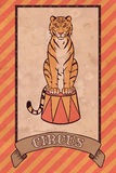 Uitstekende circusillustratie, tijger Royalty-vrije Stock Foto