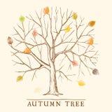 Uitstekende de herfstboom Stock Afbeelding
