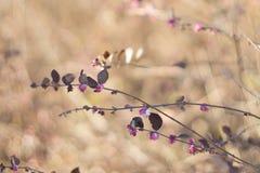 Uitstekende de herfststruik Royalty-vrije Stock Foto's