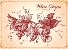 Uitstekende de Stijlillustratie van wijndruiven Stock Foto's