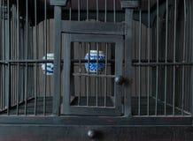 Uitstekende en Oude Houten Vogelkooi met Waterkoppen Stock Afbeeldingen