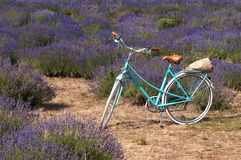 Uitstekende fiets in lavendelweide royalty-vrije stock afbeelding