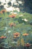Uitstekende foto van aardachtergrond met wilde bloemen en installaties Stock Afbeeldingen