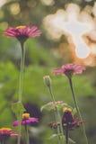 Uitstekende foto van aardachtergrond met wilde bloemen en installaties Royalty-vrije Stock Afbeeldingen