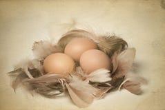 Uitstekende foto van eieren en veren Stock Foto's