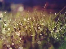 Uitstekende foto van gras na regen Stock Afbeeldingen
