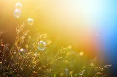 Uitstekende foto van grasgebied in zonsondergang Royalty-vrije Stock Afbeelding