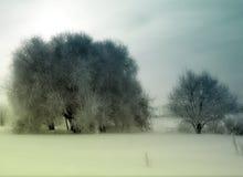 De uitstekende Bomen van de Winter royalty-vrije stock afbeelding