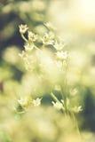Uitstekende foto van wilde bloemen in zonsondergang Stock Afbeeldingen
