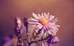 Uitstekende foto van wildflower op een met dauw bedekte ochtend Stock Foto's