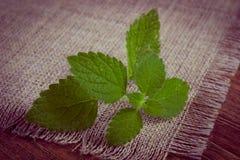 Uitstekende foto, Verse gezonde citroenbalsem op houten lijst, herbalism stock foto