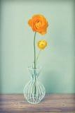Uitstekende gele Perzische boterbloemenbloemen Royalty-vrije Stock Foto's
