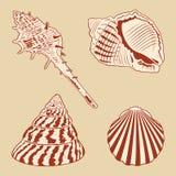 Uitstekende Geplaatst Shells. Stock Fotografie