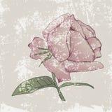 Uitstekende Grunge Rose Background Vector Illustratie