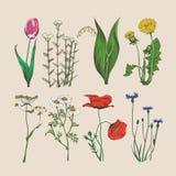 Uitstekende hand getrokken bloemen en kruiden Stock Afbeelding