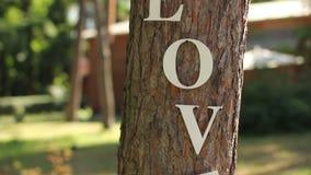 Uitstekende houten inschrijvingsliefde bij boom stock videobeelden