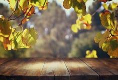 Uitstekende houten raadslijst voor dromerig en abstract boslandschap met lensgloed Stock Foto