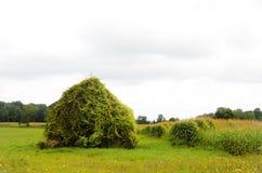 Uitstekende houten schuuroverschrijding door wijnstok op gebied Stock Foto