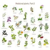 Uitstekende inzameling van hand getrokken medische kruiden en installaties Botanische reeks Stock Foto's