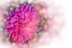 Uitstekende kaart met roze bloemen over de bokehachtergrond Stock Afbeeldingen
