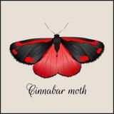 Uitstekende kaart met vlinder Minimale vlakke vectorillustratie Jacobsvlindermot Het van letters voorzien handschriftkalligrafie  Royalty-vrije Stock Foto