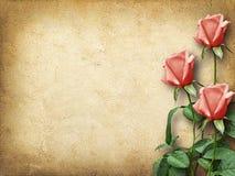 Uitstekende kaart voor gelukwensen met drie roze rozen Stock Afbeelding