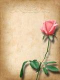 Uitstekende kaart voor gelukwensen met roze rozen Royalty-vrije Stock Fotografie