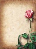 Uitstekende kaart voor gelukwensen met roze rozen Stock Foto's