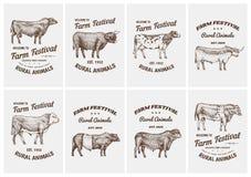 Uitstekende kaarten De stieren en de koeien van het landbouwbedrijfvee Verschillende rassen van huisdieren Reeks affiches Gegrave royalty-vrije illustratie