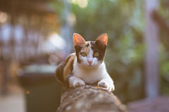 Uitstekende Kat Stock Afbeeldingen