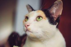 Uitstekende kat in mijn huis Stock Afbeeldingen