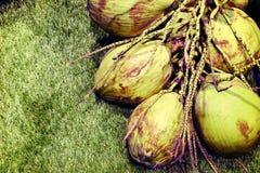 Uitstekende kokosnoot Stock Afbeeldingen