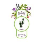 Uitstekende kruiden en kruidenetiketinzameling rozemarijn Royalty-vrije Stock Afbeelding